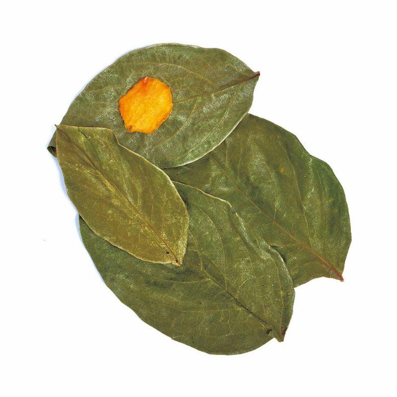 国産 乾燥柿の葉